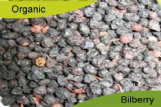 Organic Bilberry Fruit 500gm